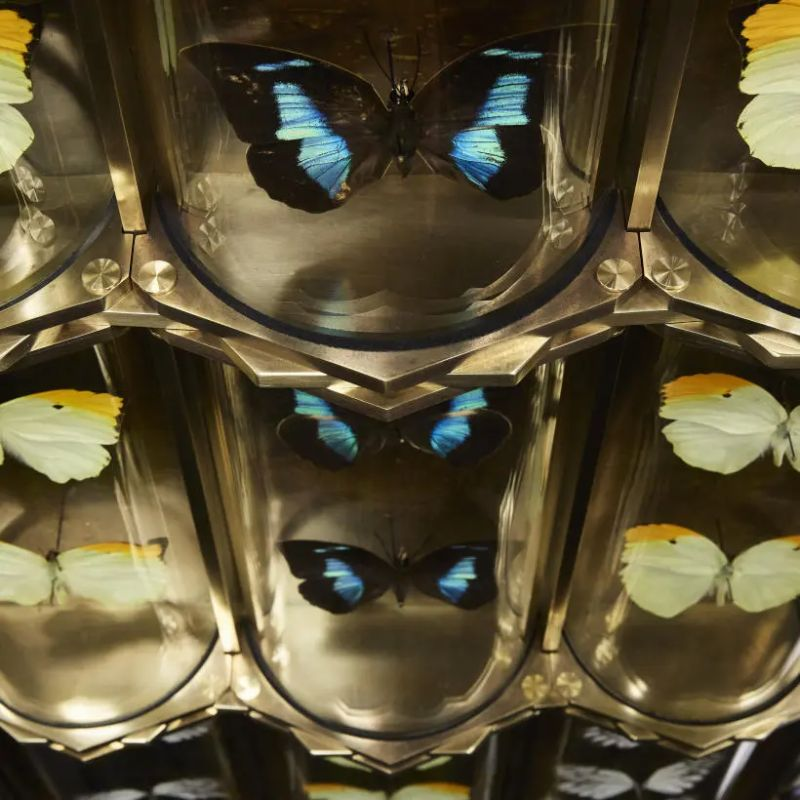 Erwan Boulloud's Charming Cabinet De Curiosités